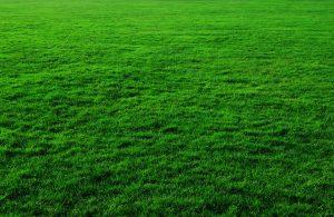 septic tank leaching bed maintenance repair bacteria green